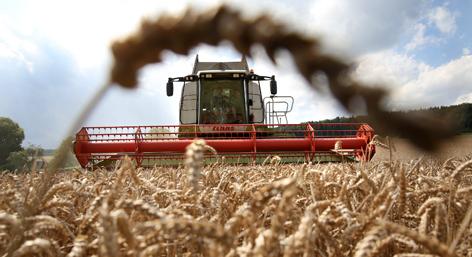 Getreideernte, Landwirtschaft, Ackerbau