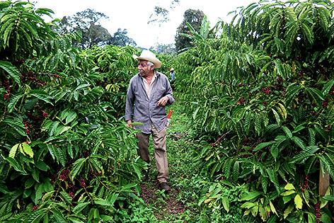 Kaffeebauer in einer Kaffeeplantage