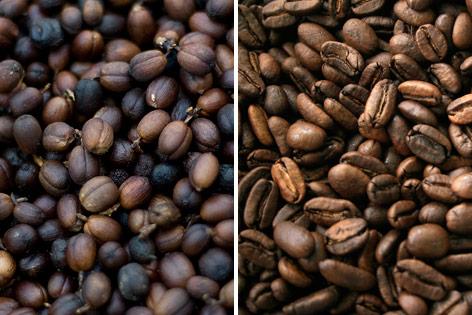 Kaffeebohnen der Sorte Robusta, Kaffeebohnen der Sorte Robusta