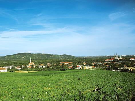 Weingarten in Klosterneuburg