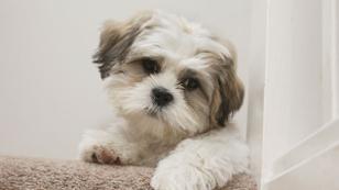 Hunde im Schlafzimmer lassen uns besser schlafen