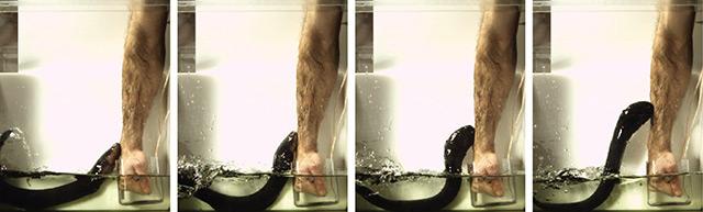 Forscher hält Arm in Becken mit einem Zitteraal