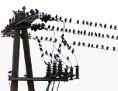 Strommast, Vögel sitzen auf der Stromleitung