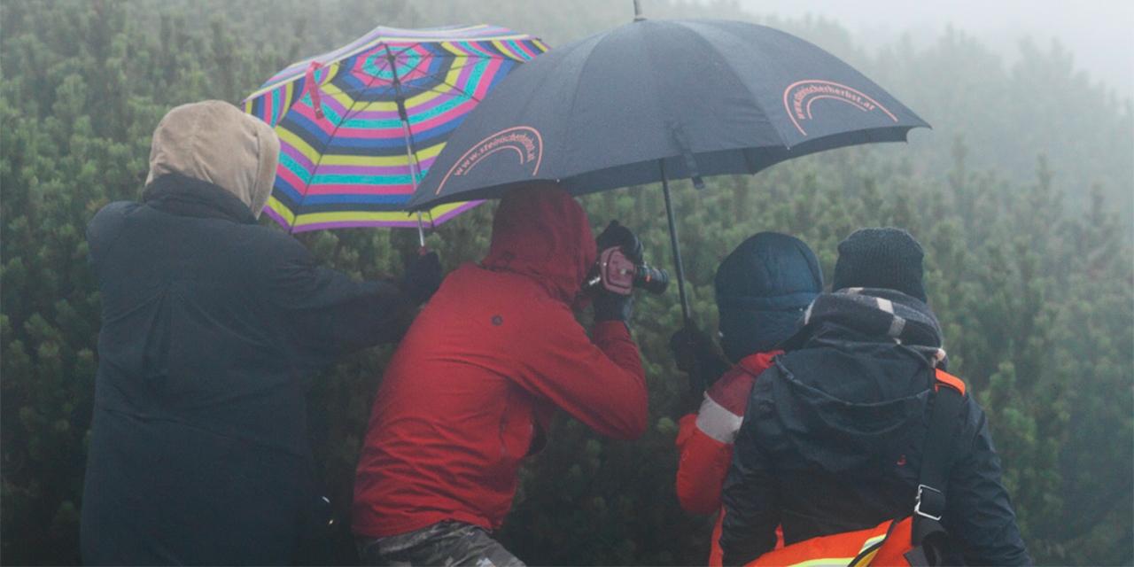 Menschen im Nebel mit Schirmen und Kamera