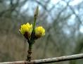 Eine gelbe Blütenknospe