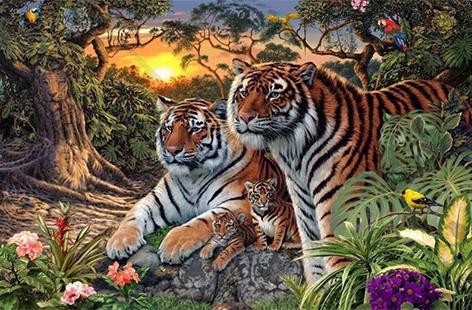 Suchbild: Tiger