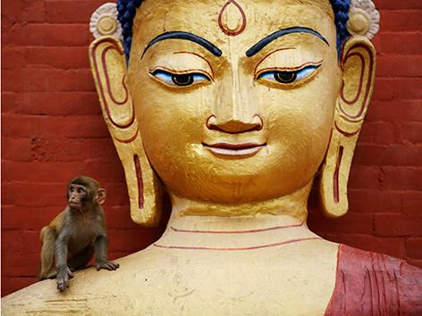 Ein Äffchen sitzt auf der Schulter einer Buddhastatue