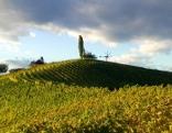 Die südsteirische Weinstraße - 60 Jahre grenzenlose Lebensfreude