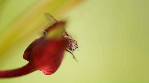 Was tun gegen nervige fruchtfliegen oe3 - Was tun gegen fruchtfliegen im zimmer ...