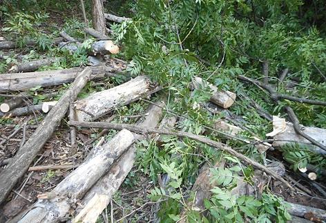 Der abgetragene Baum