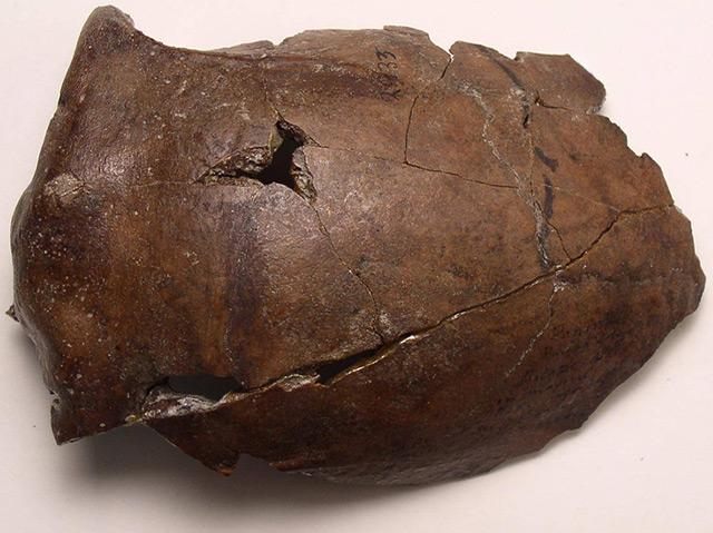 Der 6.000 Jahre Schädel