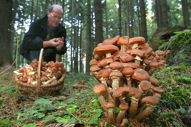 Braune Pilze im Wald