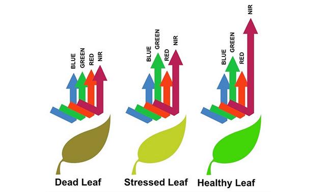 Grafik: Spektrale Abstrahlung von Blättern