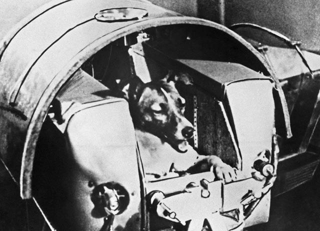 Laika in der Raumkapsel