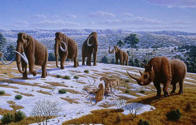 Rekonstruktion: Mammuts und Wollnashorn