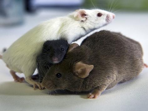 Drei Mäuse