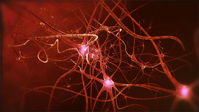Neuronen in Großaufnahme
