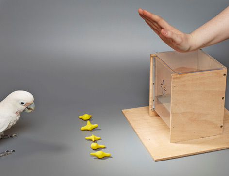Kakadu im Experiment