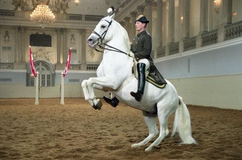 Das weiße Ballett - Die Spanische Hofreitschule