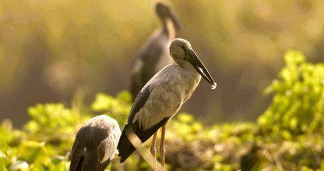 Universum Brahmaputra, Vögel