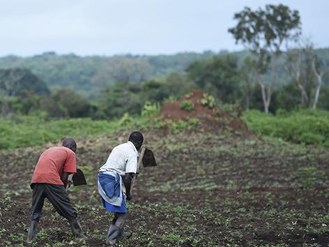 Zwei Männer arbeiten auf einem Feld im Südsudan