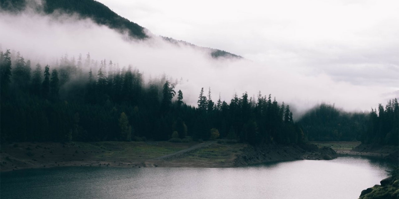 Düsteres Bild: Ein See, Bäume im Nebel