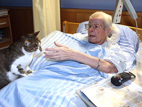 Eine Katze sitzt am Bett einer Patientin des CS Hospizes Rennweg