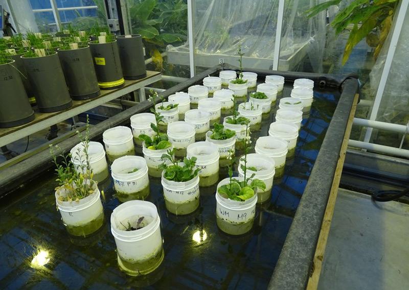 Der marsähnliche Boden im Labor