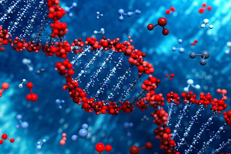 Modell: das DNA-Molekül