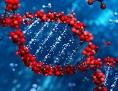 DNA-Modell: das Molekül des Lebens