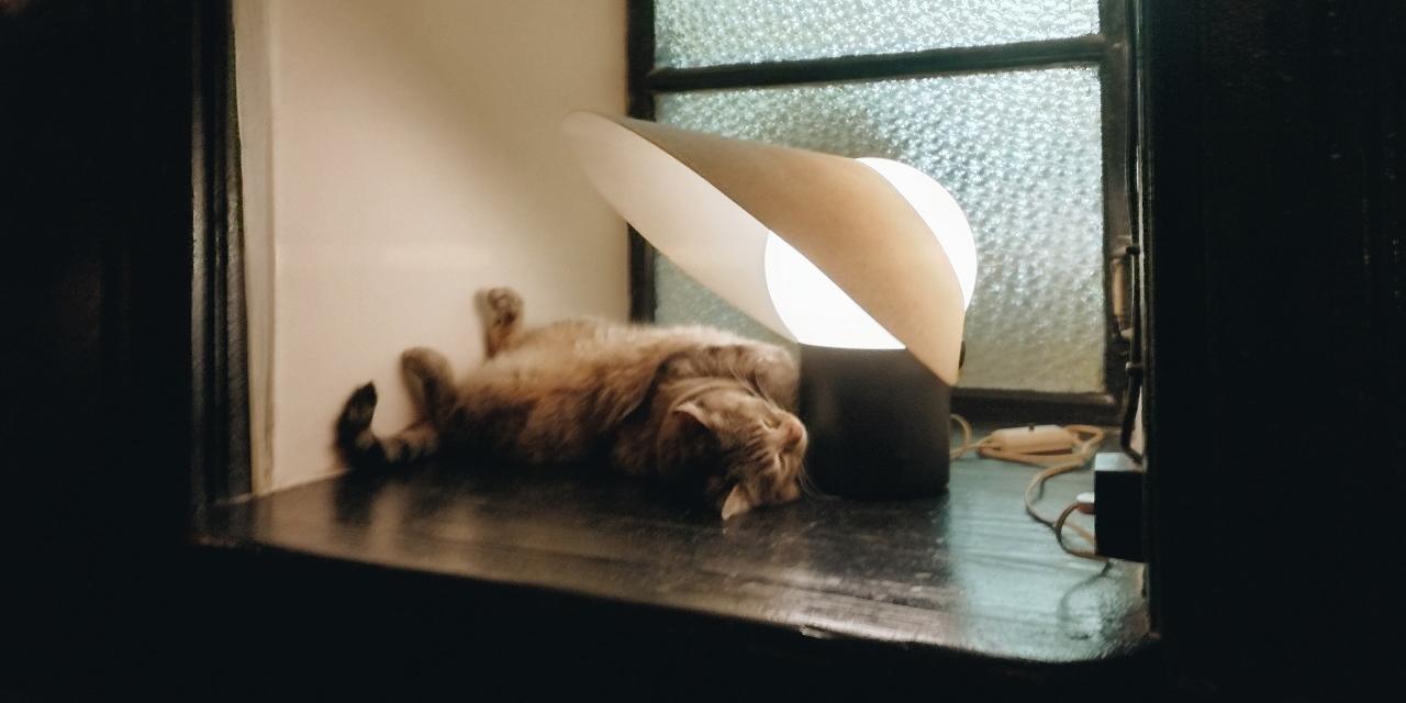 Katze Lea im Café Augustin