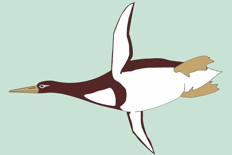 Künstlerische Darstellung von Riesenpinguin