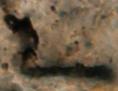 Fossile Mikrobe Primaevifilum minutum