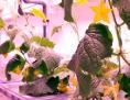 Pflanzen im antarktischen Gewächshaus