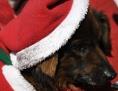 Hund in Weihnachtsmannverkleidung