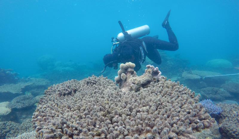 Taucher untersucht das Zenith-Riff an der Nordostküste Australiens