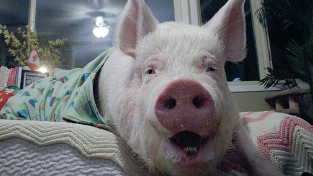 Schwein Esther