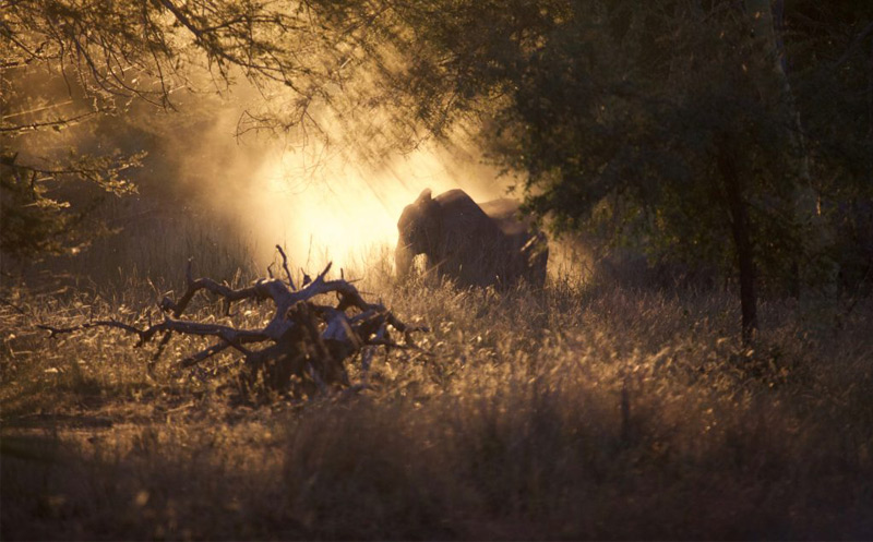 Der Bestand der Elefanten im Gorongosa-Nationalpark hat sich in den vergangenen zehn Jahren wieder erholt