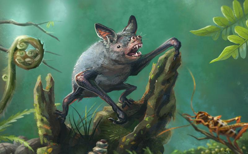 Illustration einer //Mystacina robusta//: einer anderen Art grabender Fledermäuse, die in den 1960er Jahren auf Neuseeland ausgestorben ist