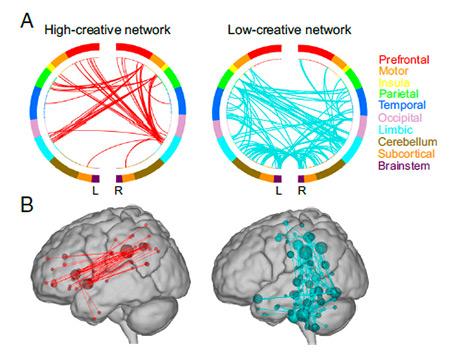 Netzwerkdiagramm zeigt Kreativität im Gehirn
