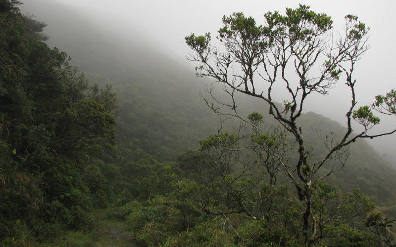 Bergregenwald in den Anden