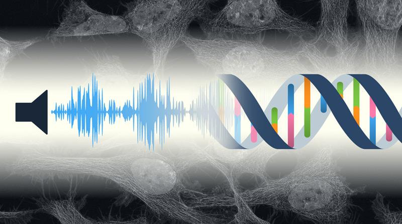 Illustration: Lärm führt zu genetischen Veränderungen in Zellen