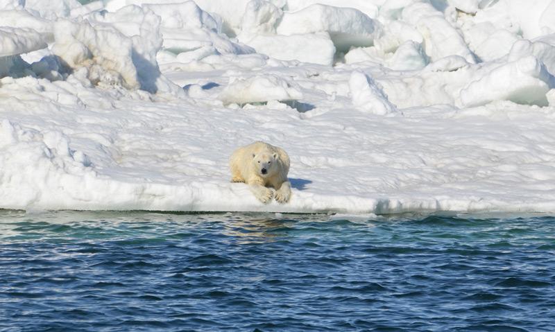 Eisbär auf Eisscholle und Meer