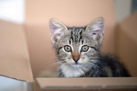 Katze in Schachtel