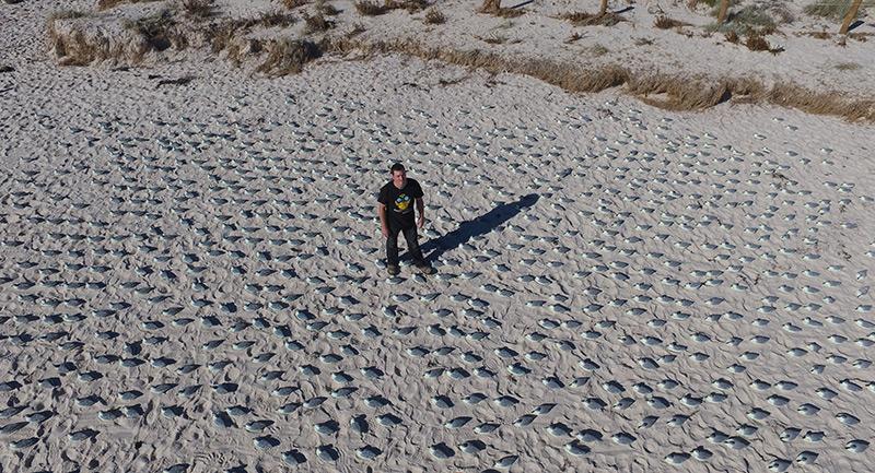 Forscher mit Plastikvögeln am Strand