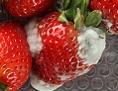 Verschimmelte Erdbeeren in einer Plastiktasse
