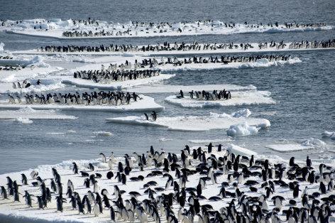 Eisige Welten  Wettlauf gegen die Kälte (4)  Originaltitel: Frozen Planet: Autumn