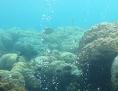 Unterwasseraufnahme: Korallenriff ohne Sand