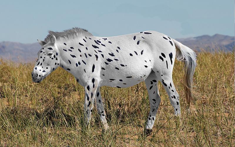 Visualisierung: So könnte ein historisches Przewalski-Pferd ausgesehen haben