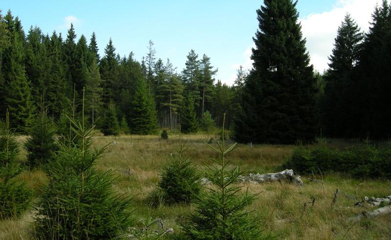 Das Schlöppnerbrunnen-Moor im bayerischen Fichtelgebirge